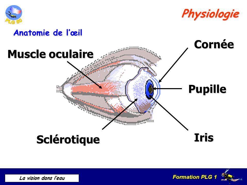 Formation PLG 1 La vision dans leau 0 m :100 % 1 m :40 % 10 m: 14 % 20 m: 7 % 40 m: 1.5 % Intensité lumineuse Les effets dans leau Labsorption
