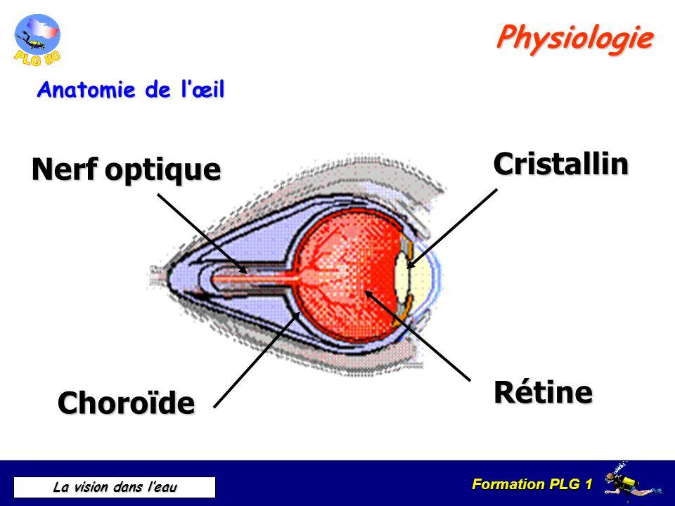Formation PLG 1 La vision dans leau Physiologie Fonctionnement de lœil Vision dun objet fixe
