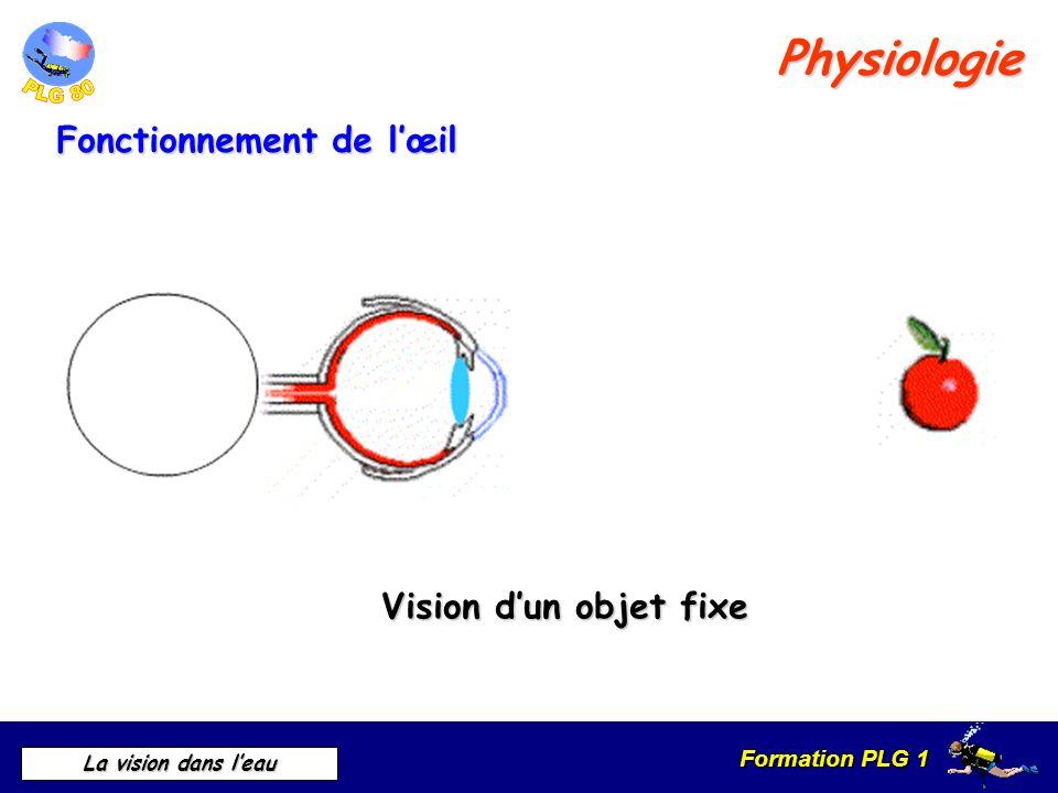 Formation PLG 1 La vision dans leau IMPORTANCE DU VIDAGE DE MASQUE Application en plongée Sous leau sans masque Vision floue