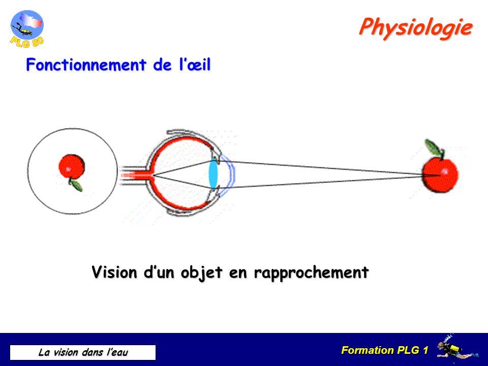 Formation PLG 1 La vision dans leau Physiologie Fonctionnement de lœil Vision dun objet en rapprochement