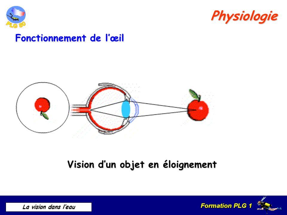 Formation PLG 1 La vision dans leau Fonctionnement de lœil Physiologie Vision dun objet en éloignement