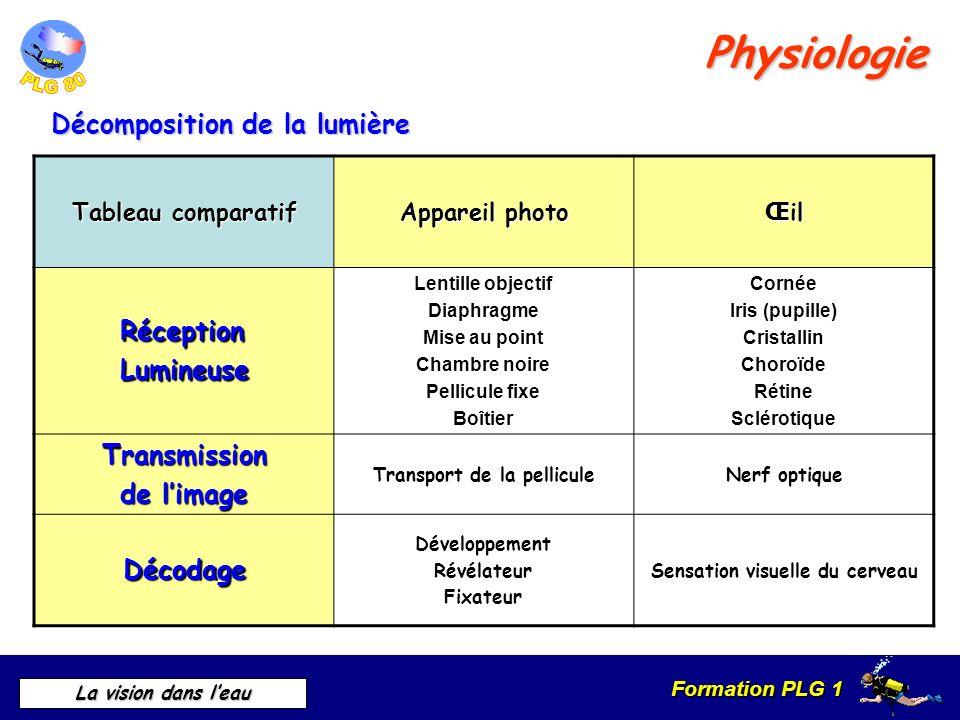 Formation PLG 1 La vision dans leau Physiologie Décomposition de la lumière Tableau comparatif Appareil photo Œ il RéceptionLumineuse Lentille objecti