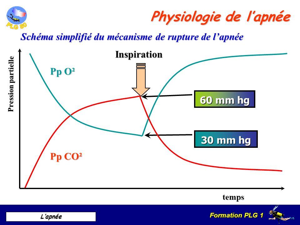 Formation PLG 1 Lapnée Schéma simplifié du mécanisme de rupture de lapnée 60 mm hg 30 mm hg Pp CO² Pp O² Pression partielle temps Inspiration Physiolo