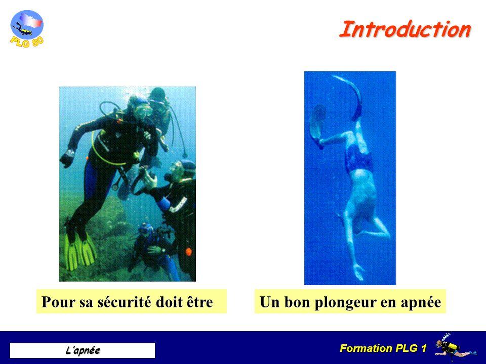 Formation PLG 1 Lapnée Introduction Un bon plongeur en apnée Pour sa sécurité doit être