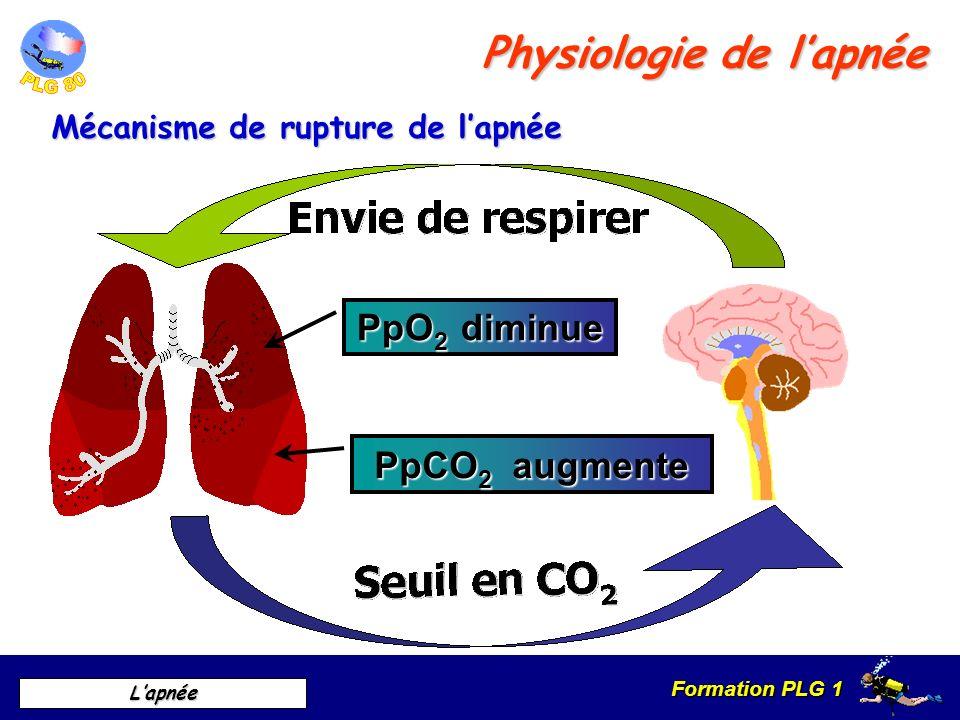 Formation PLG 1 Lapnée Schéma simplifié du mécanisme de rupture de lapnée 60 mm hg 30 mm hg Pp CO² Pp O² Pression partielle temps Inspiration Physiologie de lapnée