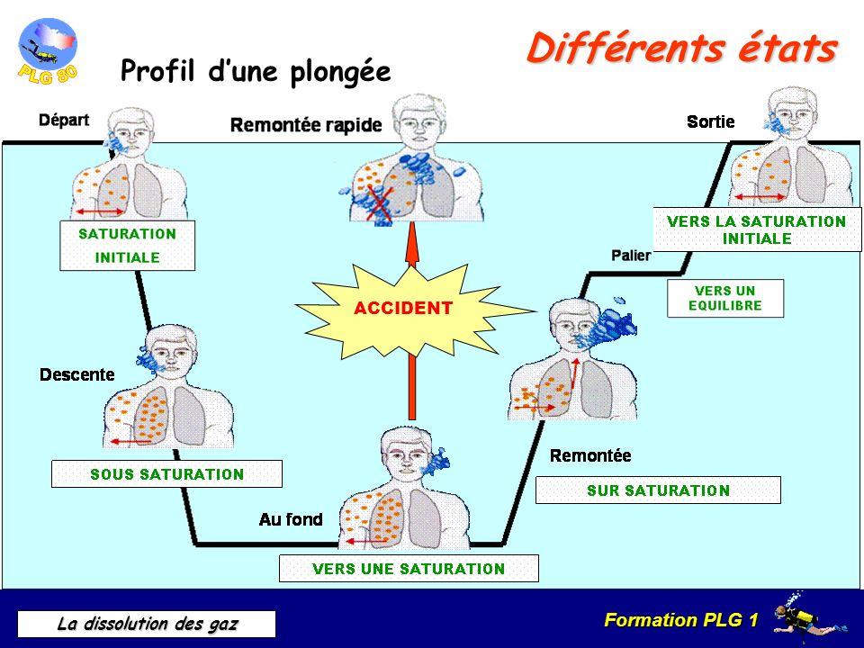 Formation PLG 1 La dissolution des gaz Différents états Profil dune plongée ACCIDENT