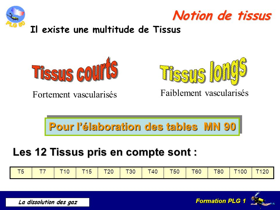 Formation PLG 1 La dissolution des gaz Notion de tissus Il existe une multitude de Tissus Fortement vascularisés Faiblement vascularisés Les 12 Tissus