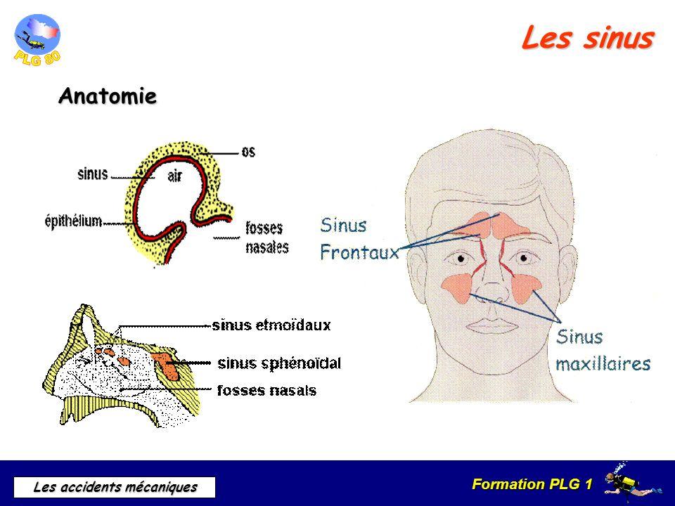 Formation PLG 1 Les accidents mécaniques Les sinus Anatomie