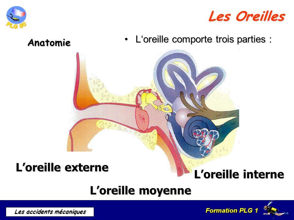 Formation PLG 1 Les accidents mécaniques Les Oreilles Anatomie Loreille comporte trois parties :Loreille comporte trois parties : Loreille externe Lor