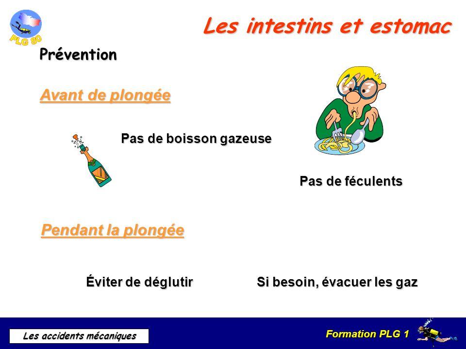 Formation PLG 1 Les accidents mécaniques Les intestins et estomac Prévention Pendant la plongée Avant de plongée Pas de boisson gazeuse Pas de féculen