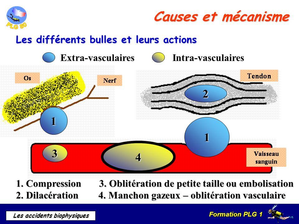 Formation PLG 1 Les accidents biophysiques Causes et mécanisme 1 1 2 3 4 Extra-vasculairesIntra-vasculaires 1. Compression 2. Dilacération 3. Oblitéra