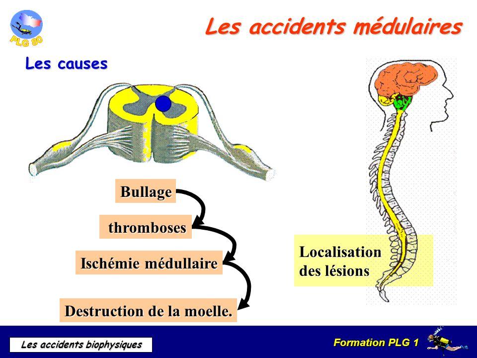Formation PLG 1 Les accidents biophysiques Localisation des lésions Les accidents médulaires Les causes Bullage thromboses thromboses Ischémie médulla