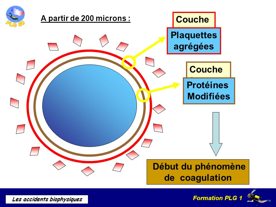 Formation PLG 1 Les accidents biophysiques A partir de 200 microns : Couche 2 Protéines Modifiées Couche 1 Plaquettes agrégées Début du phénomène de c