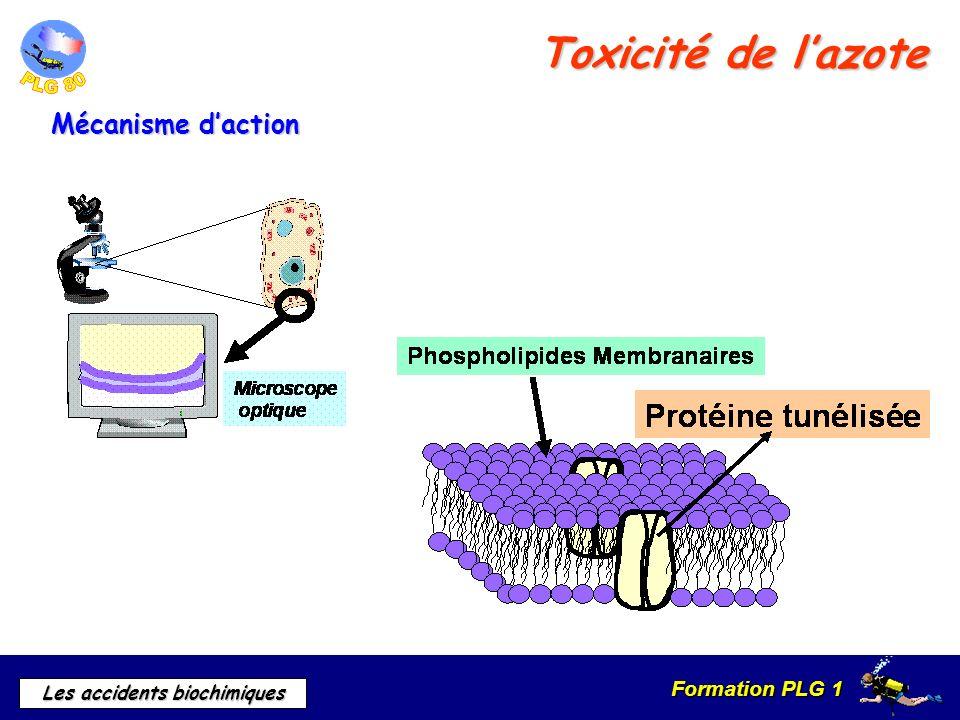 Formation PLG 1 Les accidents biochimiques Toxicité de lazote Mécanisme daction
