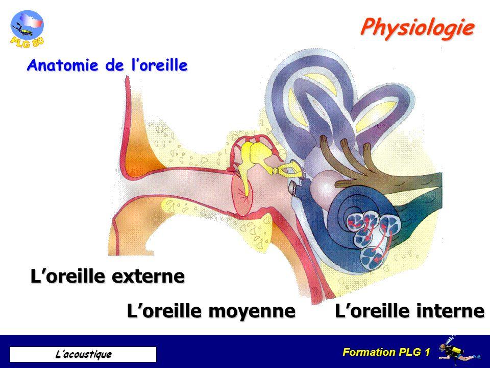 Formation PLG 1 Lacoustique Pavillon Conduit auditif Tympan Physiologie Loreille externe