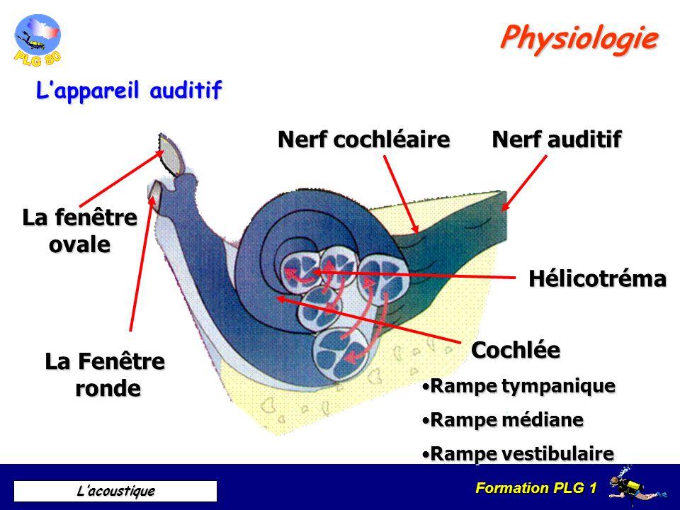 Formation PLG 1 Lacoustique Canaux semi-circulaires Système maculaire Système maculaire UtriculeUtricule SacculeSaccule Nerf vestibulaire Nerf auditif Physiologie Lappareil vestibulaire