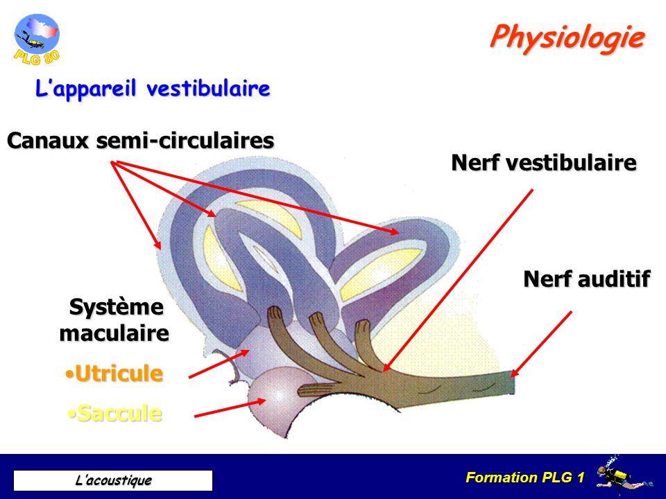 Formation PLG 1 Lacoustique Physiologie Fonctionnement de lappareil auditif