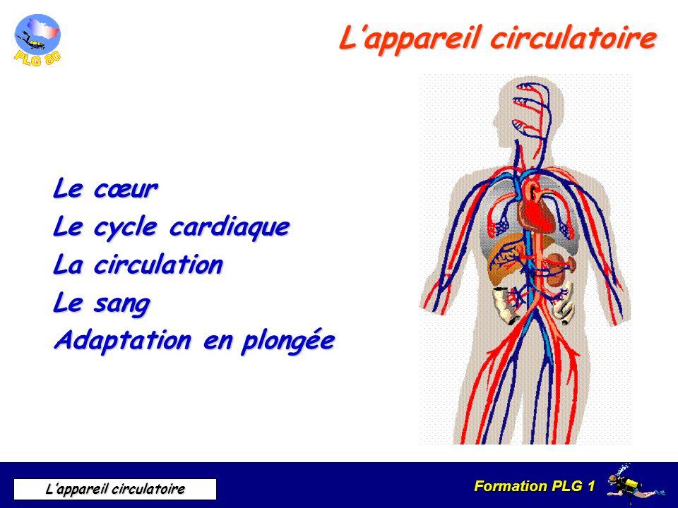 Formation PLG 1 Lappareil circulatoire Lappareil circulatoire Le cœur Le cycle cardiaque La circulation Le sang Adaptation en plongée