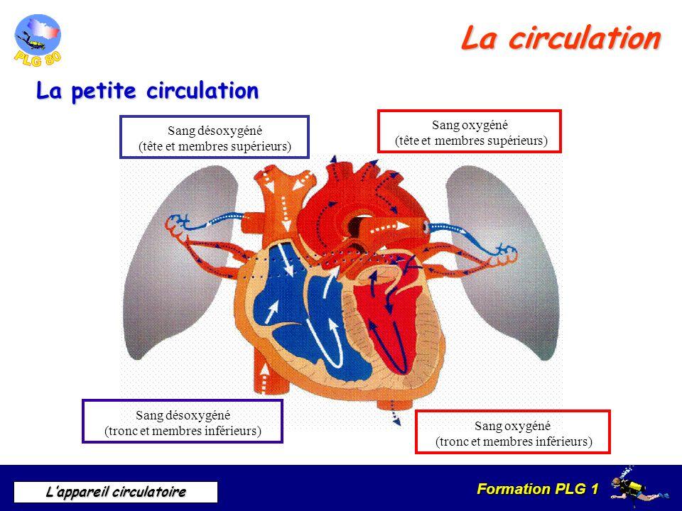 Formation PLG 1 Lappareil circulatoire La circulation La petite circulation Sang désoxygéné (tête et membres supérieurs) Sang oxygéné (tête et membres