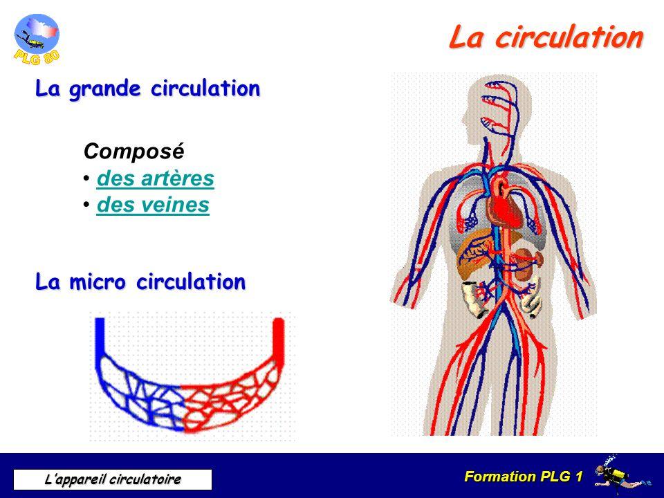 Formation PLG 1 Lappareil circulatoire La circulation La grande circulation La micro circulation Composé des artères des veines