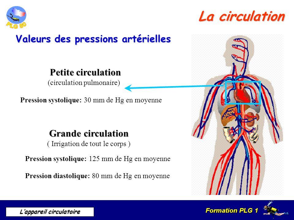 Formation PLG 1 Lappareil circulatoire La circulation Valeurs des pressions artérielles Grande circulation ( Irrigation de tout le corps ) Petite circ