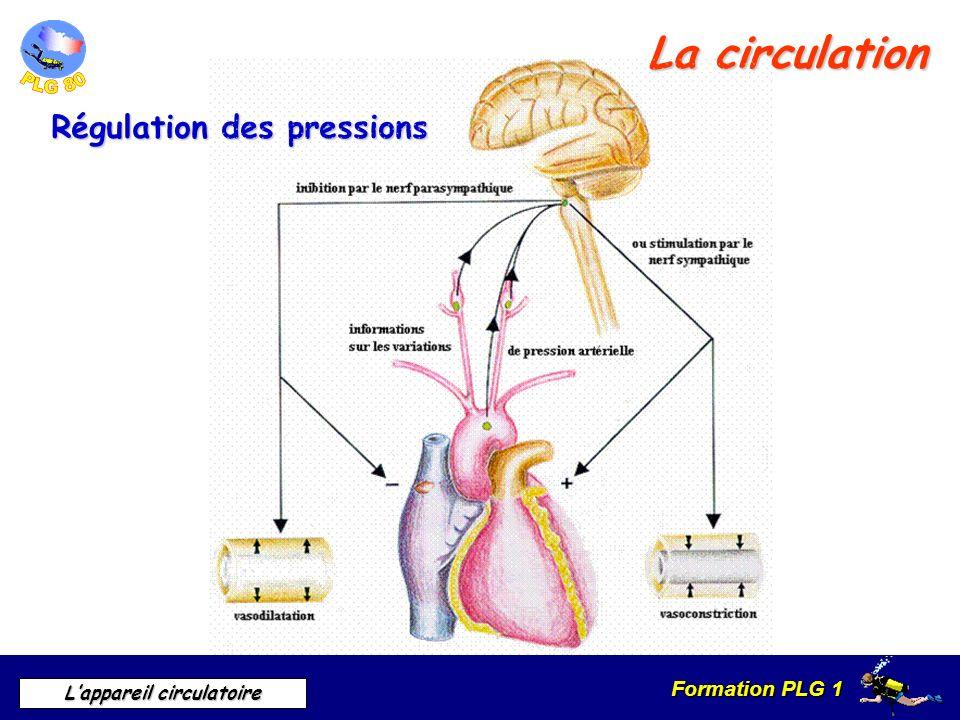 Formation PLG 1 Lappareil circulatoire La circulation Régulation des pressions