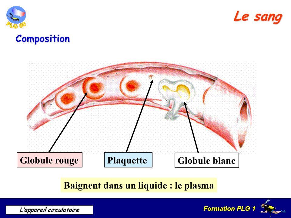 Formation PLG 1 Lappareil circulatoire Le sang Composition Baignent dans un liquide : le plasma Globule rouge Globule blanc Plaquette