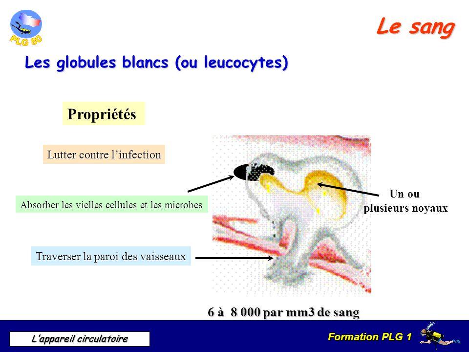 Formation PLG 1 Lappareil circulatoire Le sang Les globules blancs (ou leucocytes) 6 à 8 000 par mm3 de sang Propriétés Lutter contre linfection Absor