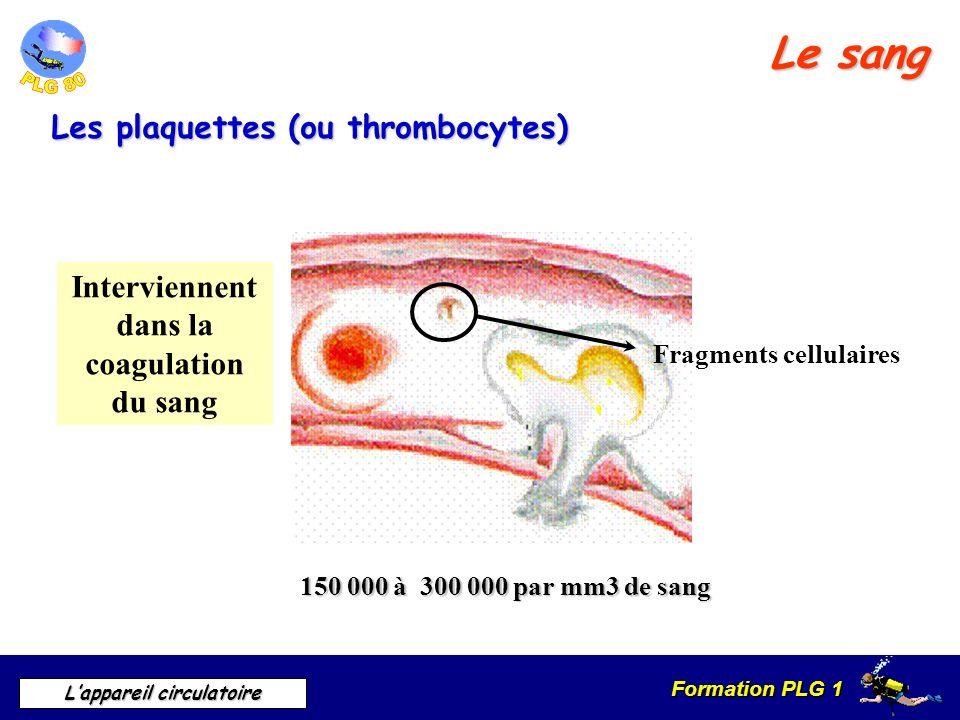 Formation PLG 1 Lappareil circulatoire Le sang Les plaquettes (ou thrombocytes) 150 000 à 300 000 par mm3 de sang Interviennent dans la coagulation du