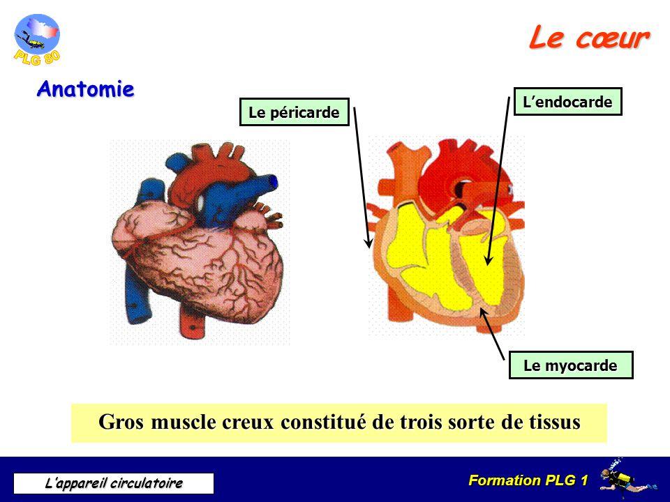 Formation PLG 1 Lappareil circulatoire Le cœur Anatomie Gros muscle creux constitué de trois sorte de tissus Lendocarde Le péricarde Le myocarde