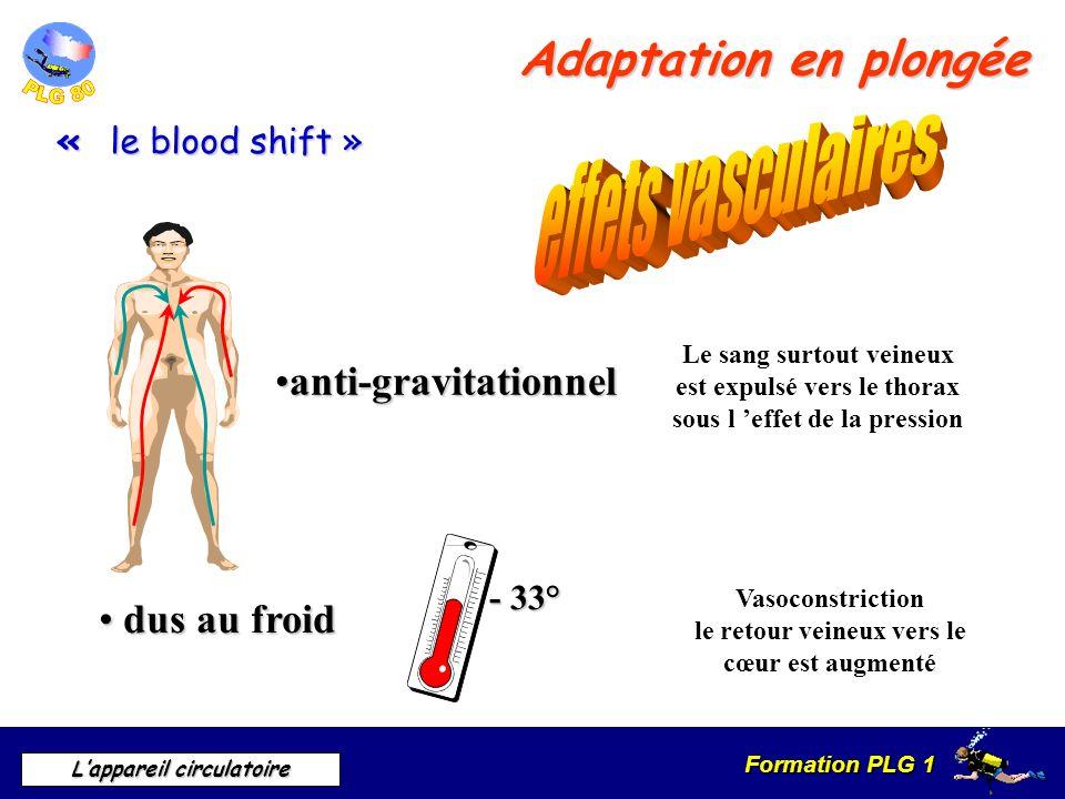Formation PLG 1 Lappareil circulatoire Adaptation en plongée anti-gravitationnelanti-gravitationnel Le sang surtout veineux est expulsé vers le thorax