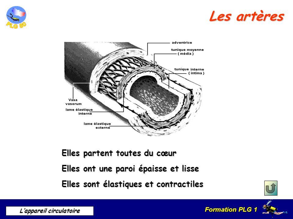 Formation PLG 1 Lappareil circulatoire Les artères Elles partent toutes du cœur Elles ont une paroi épaisse et lisse Elles sont élastiques et contract