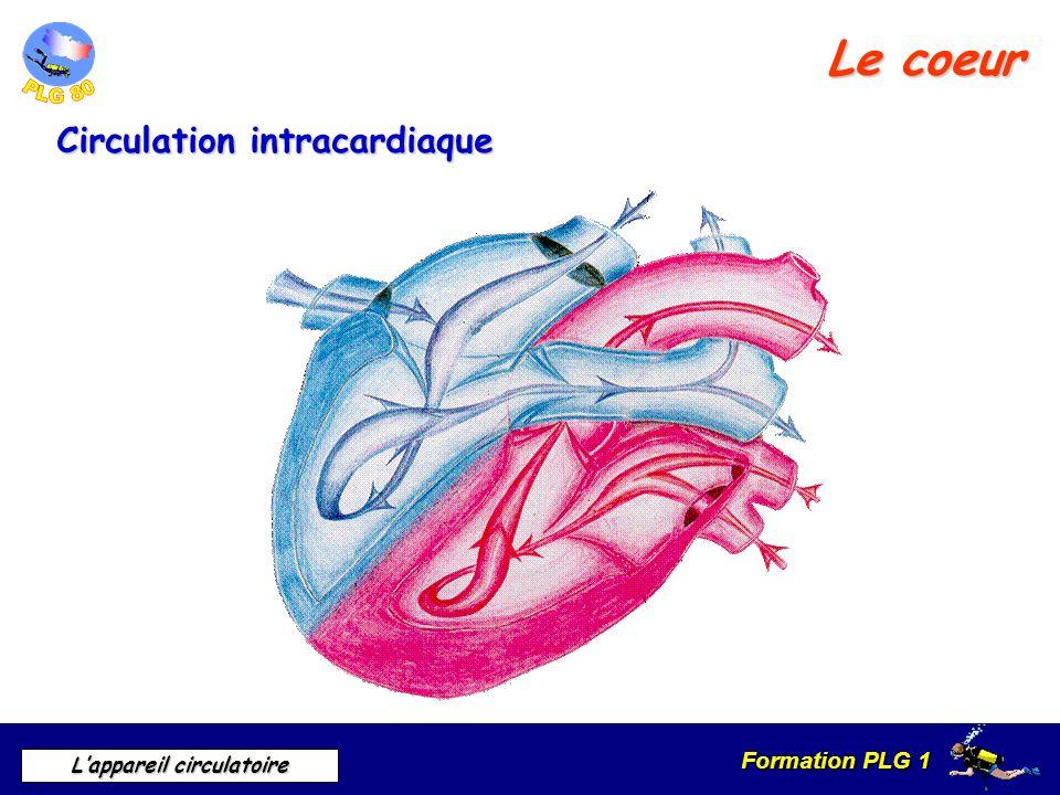 Formation PLG 1 Lappareil circulatoire Le coeur Circulation intracardiaque