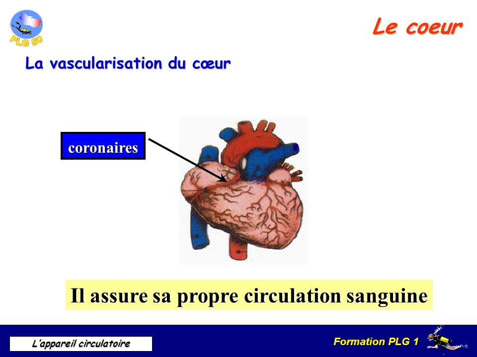 Formation PLG 1 Lappareil circulatoire Le coeur La vascularisation du cœur coronaires Il assure sa propre circulation sanguine