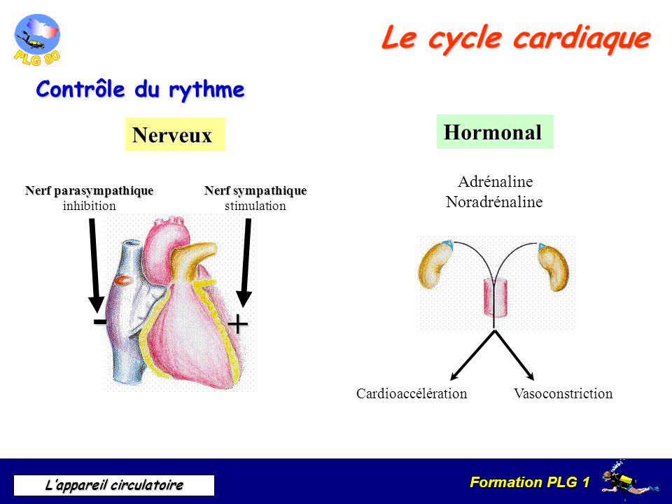 Formation PLG 1 Lappareil circulatoire Le cycle cardiaque Contrôle du rythme Nerveux Hormonal Adrénaline Noradrénaline Nerf parasympathique inhibition