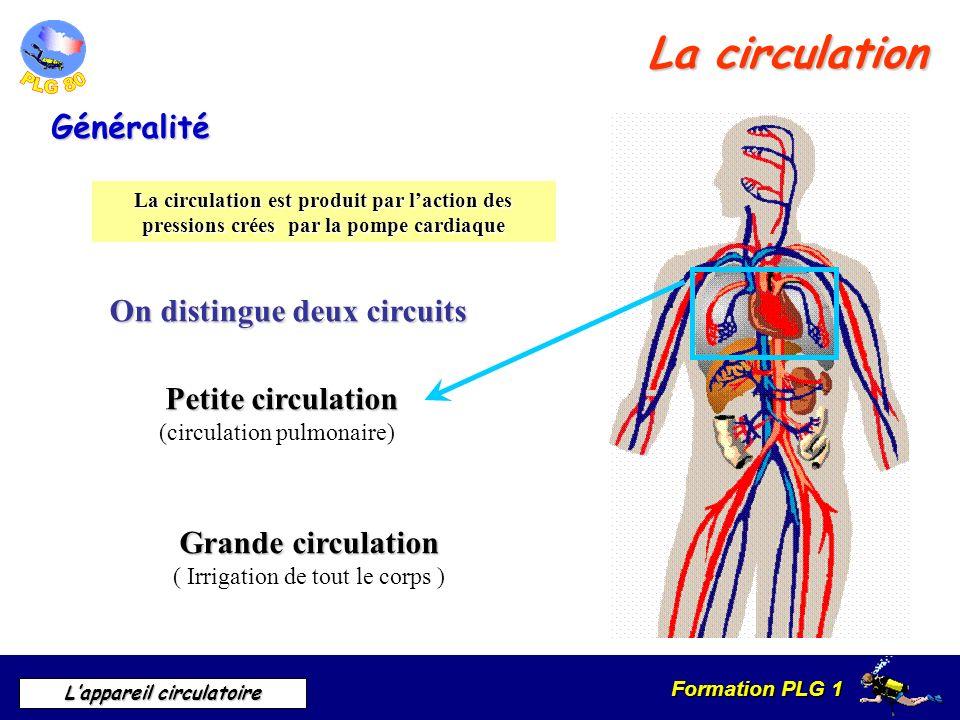 Formation PLG 1 Lappareil circulatoire La circulation Généralité La circulation est produit par laction des pressions crées par la pompe cardiaque On
