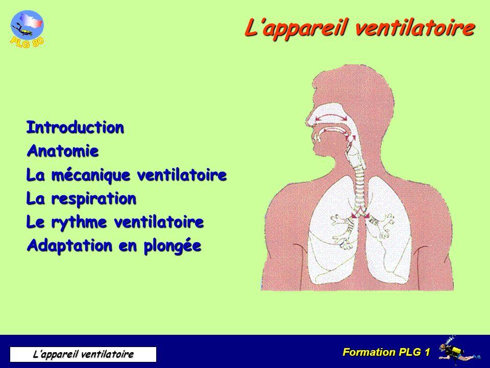 Formation PLG 1 Lappareil ventilatoire IntroductionAnatomie La mécanique ventilatoire La respiration Le rythme ventilatoire Adaptation en plongée