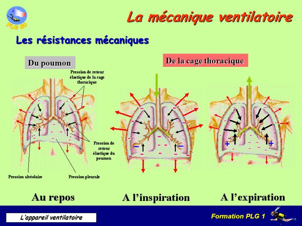 Formation PLG 1 Lappareil ventilatoire La mécanique ventilatoire Les résistances mécaniques Du poumon De la cage thoracique