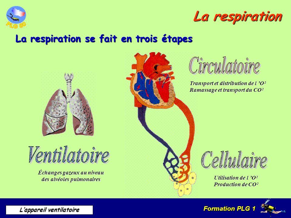 Formation PLG 1 Lappareil ventilatoire La respiration La respiration se fait en trois étapes Échanges gazeux au niveau des alvéoles pulmonaires Transp