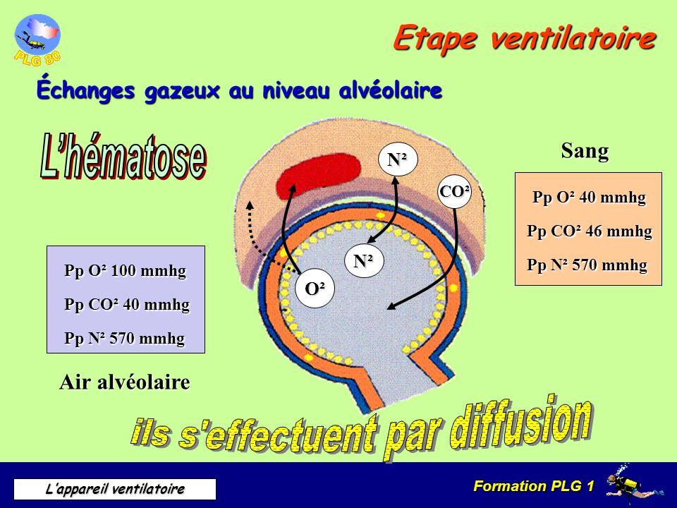 Formation PLG 1 Lappareil ventilatoire Etape ventilatoire Échanges gazeux au niveau alvéolaire Sang Air alvéolaire CO² O² N² N² Pp O² 100 mmhg Pp O² 4