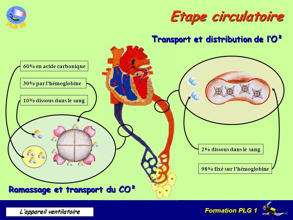 Formation PLG 1 Lappareil ventilatoire Etape circulatoire Transport et distribution de lO² Ramassage et transport du CO² 2% dissous dans le sang 98% f
