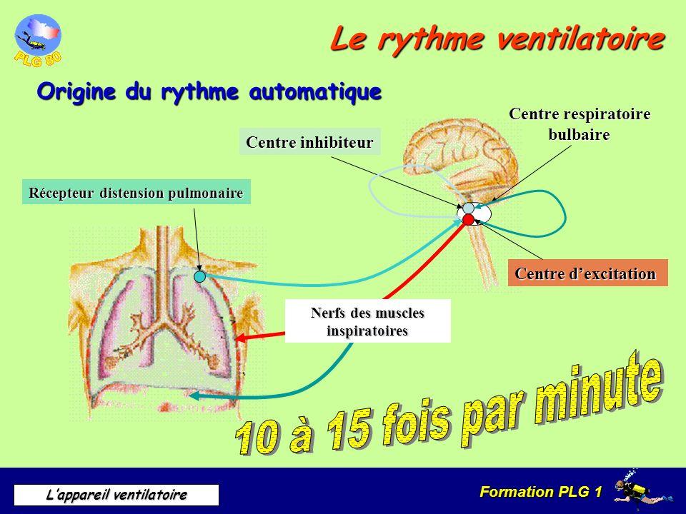 Formation PLG 1 Lappareil ventilatoire Le rythme ventilatoire Origine du rythme automatique Centre respiratoire bulbaire Nerfs des muscles inspiratoir