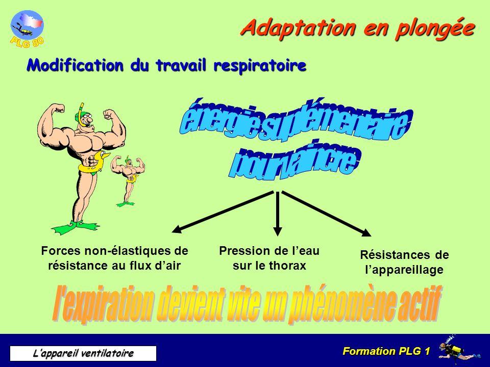 Formation PLG 1 Lappareil ventilatoire Adaptation en plongée Modification du travail respiratoire Pression de leau sur le thorax Forces non-élastiques