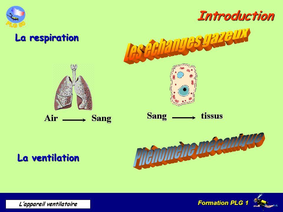 Formation PLG 1 Lappareil ventilatoire La respiration La respiration se fait en trois étapes Échanges gazeux au niveau des alvéoles pulmonaires Transport et distribution de l O² Ramassage et transport du CO² Utilisation de l O² Production de CO²