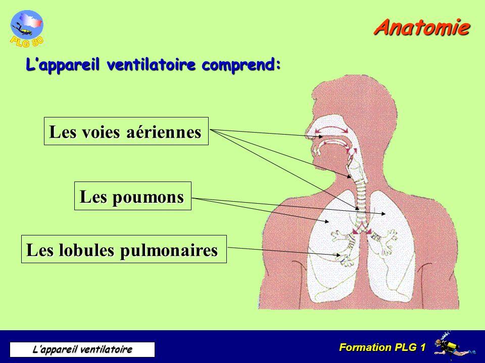 Formation PLG 1 Lappareil ventilatoire Anatomie Les voies aériennes Sinus Fosses nasales Voûte du palais Trompe deustache Langue Pharynx Glotte Larynx Œsophage Trachée artère