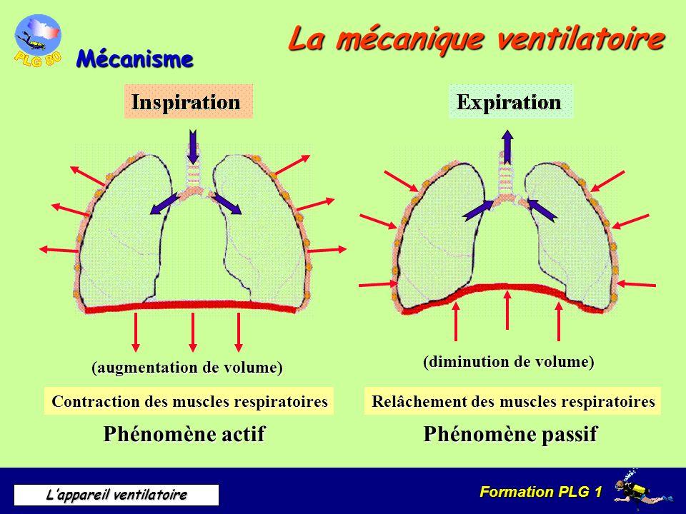 Formation PLG 1 Lappareil ventilatoire La mécanique ventilatoire Mécanisme (augmentation de volume) (diminution de volume) Contraction des muscles res