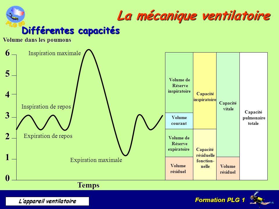Formation PLG 1 Lappareil ventilatoire La mécanique ventilatoire Différentes capacités Volume dans les poumons 6 5 4 3 2 1 0 Temps Volume de Réserve i