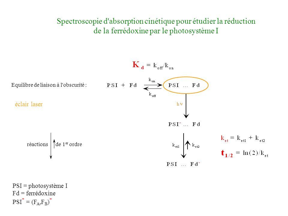 PSI = photosystème I Fd = ferrédoxine PSI - = (F A,F B ) - réactions de 1 er ordre éclair laser Spectroscopie d absorption cinétique pour étudier la réduction de la ferrédoxine par le photosystème I Equilibre de liaison à l obscurité :