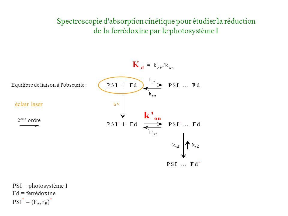 PSI = photosystème I Fd = ferrédoxine PSI - = (F A,F B ) - 2 ème ordre éclair laser Spectroscopie d absorption cinétique pour étudier la réduction de la ferrédoxine par le photosystème I Equilibre de liaison à l obscurité :