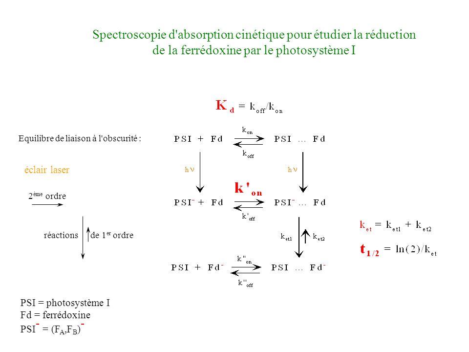 Spectroscopie d absorption cinétique pour étudier la réduction de la ferrédoxine par le photosystème I réactions de 1 er ordre 2 ème ordre éclair laser PSI = photosystème I Fd = ferrédoxine PSI - = (F A,F B ) -